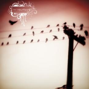 birds-ona-wire